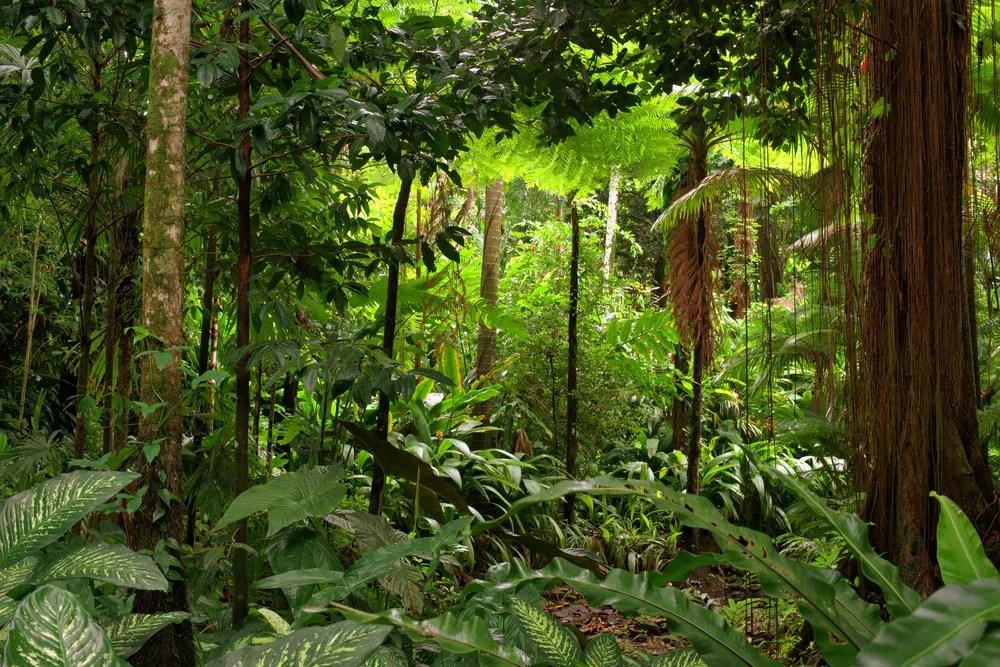 Resultado de imagem para tropical forest peru