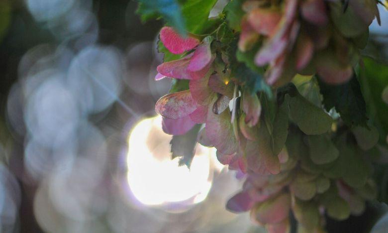 ljus genom träd