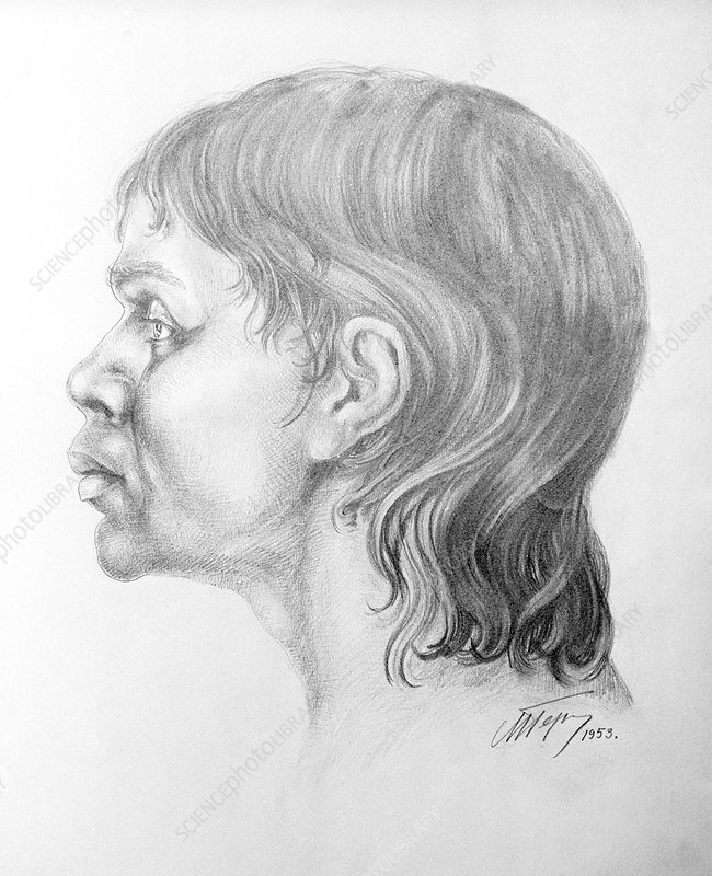 Homo Cro Magnon : magnon, Cro-Magnon, Woman,, Artwork, Stock, Image, C020/8188, Science, Photo, Library