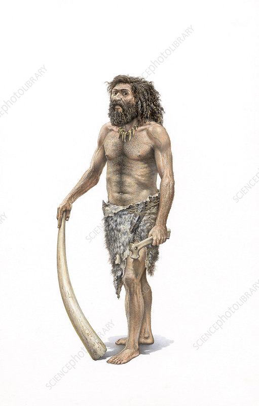 Homo Cro Magnon : magnon, Cro-Magnon, Human, Stock, Image, C010/8492, Science, Photo, Library