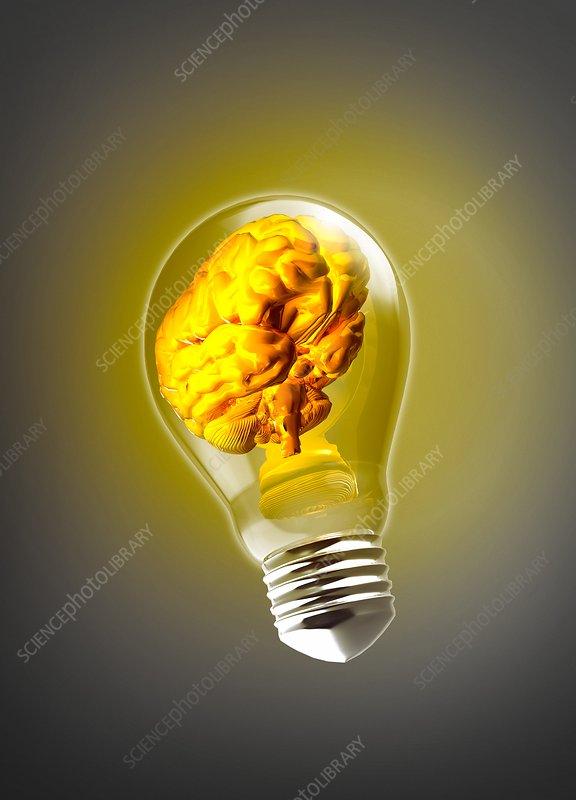 human brain inside light