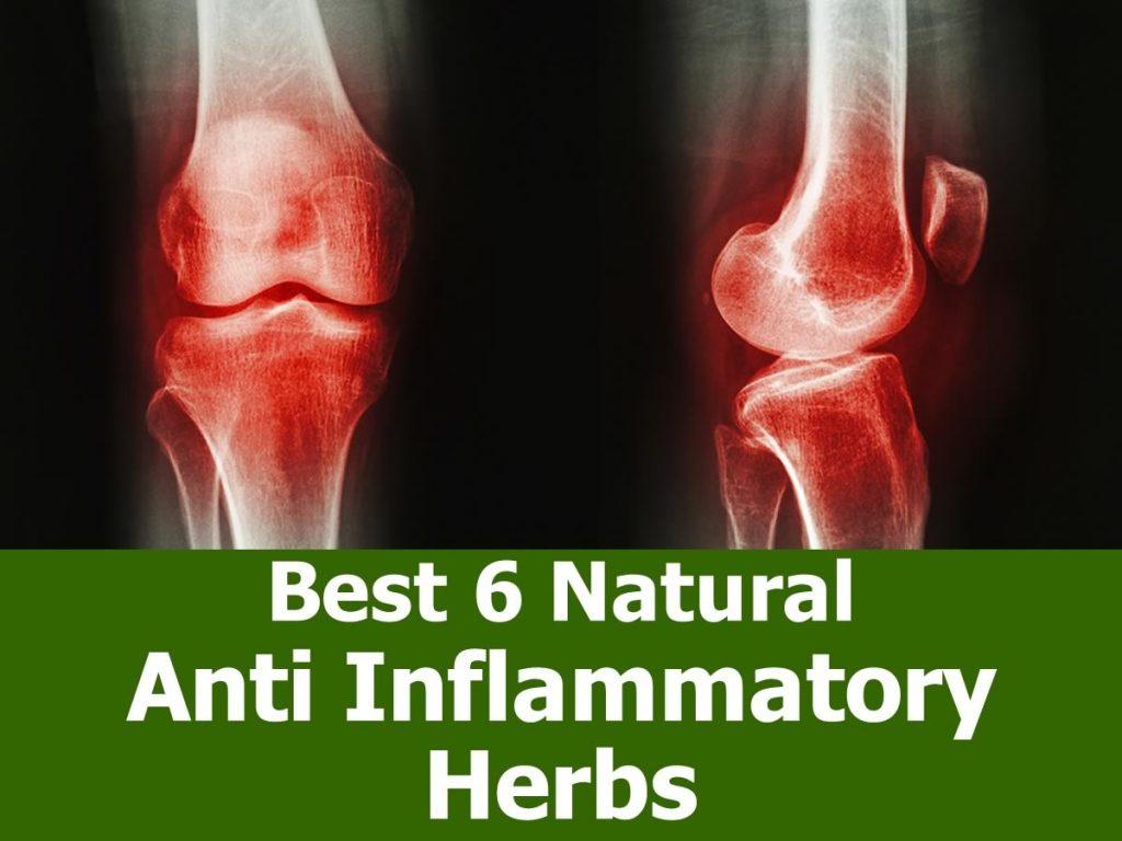 Best 6 Natural Anti Inflammatory Herbs
