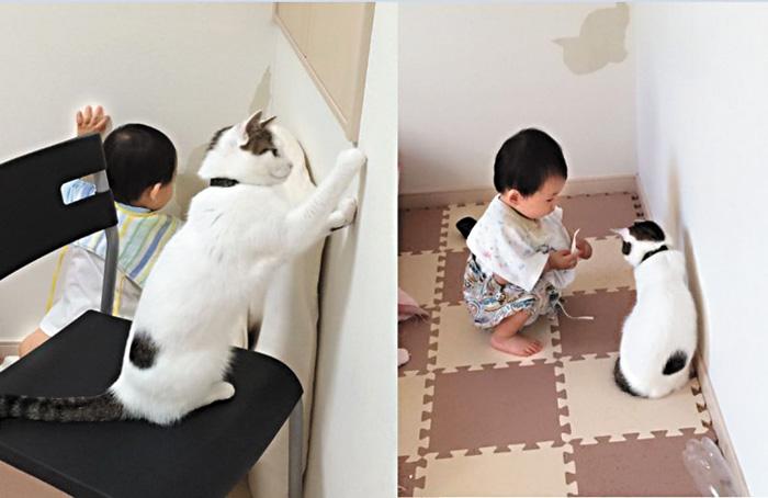貓咪「教」幼童合力剝壁紙   多倫多   加拿大中文新聞網 - 加拿大星島日報 Canada Chinese News