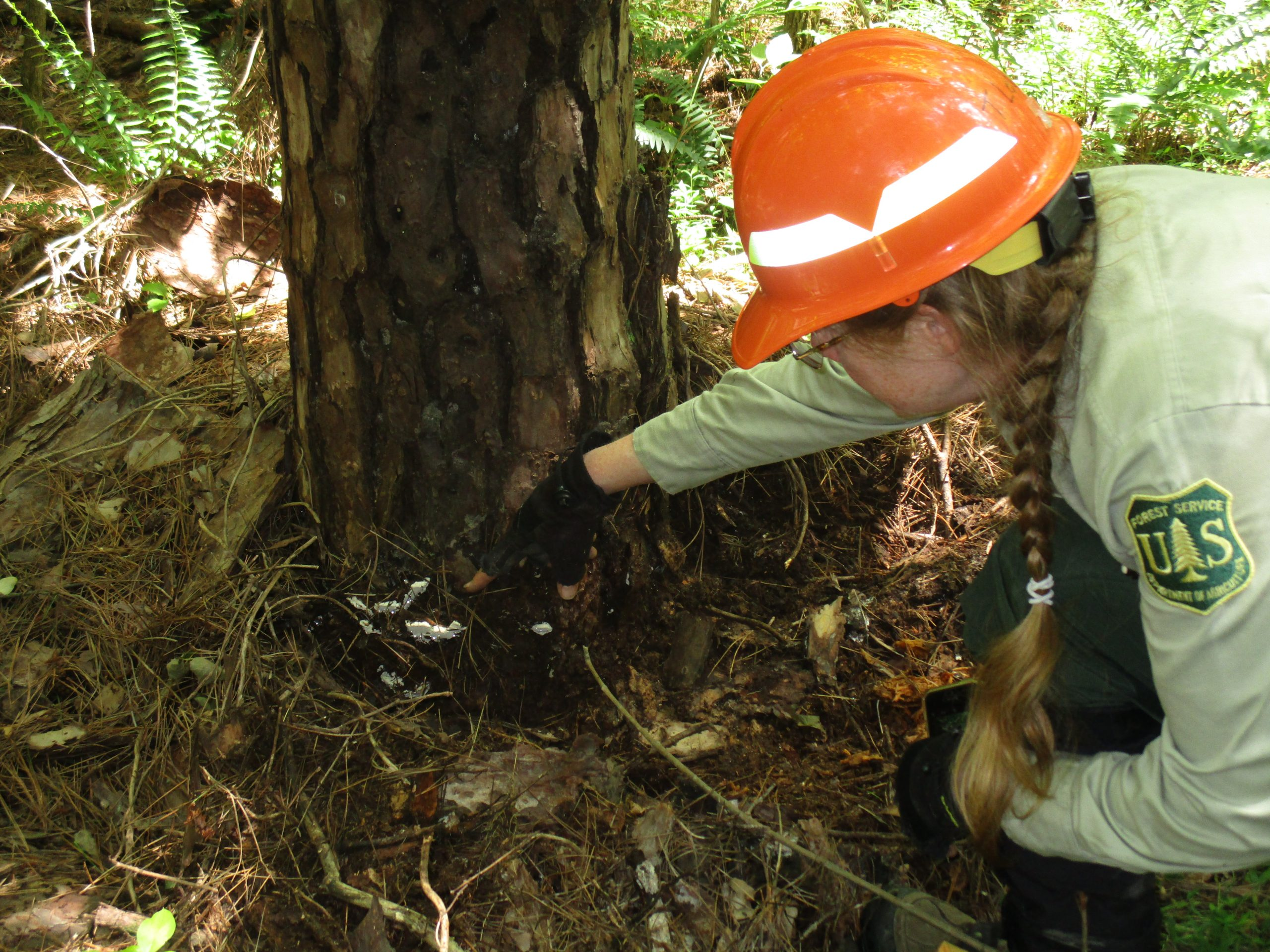 Here's more information on the jobs that tree service businesses. U S Forest Service Releases Report On Insects Disease Radioresultsnetwork Com