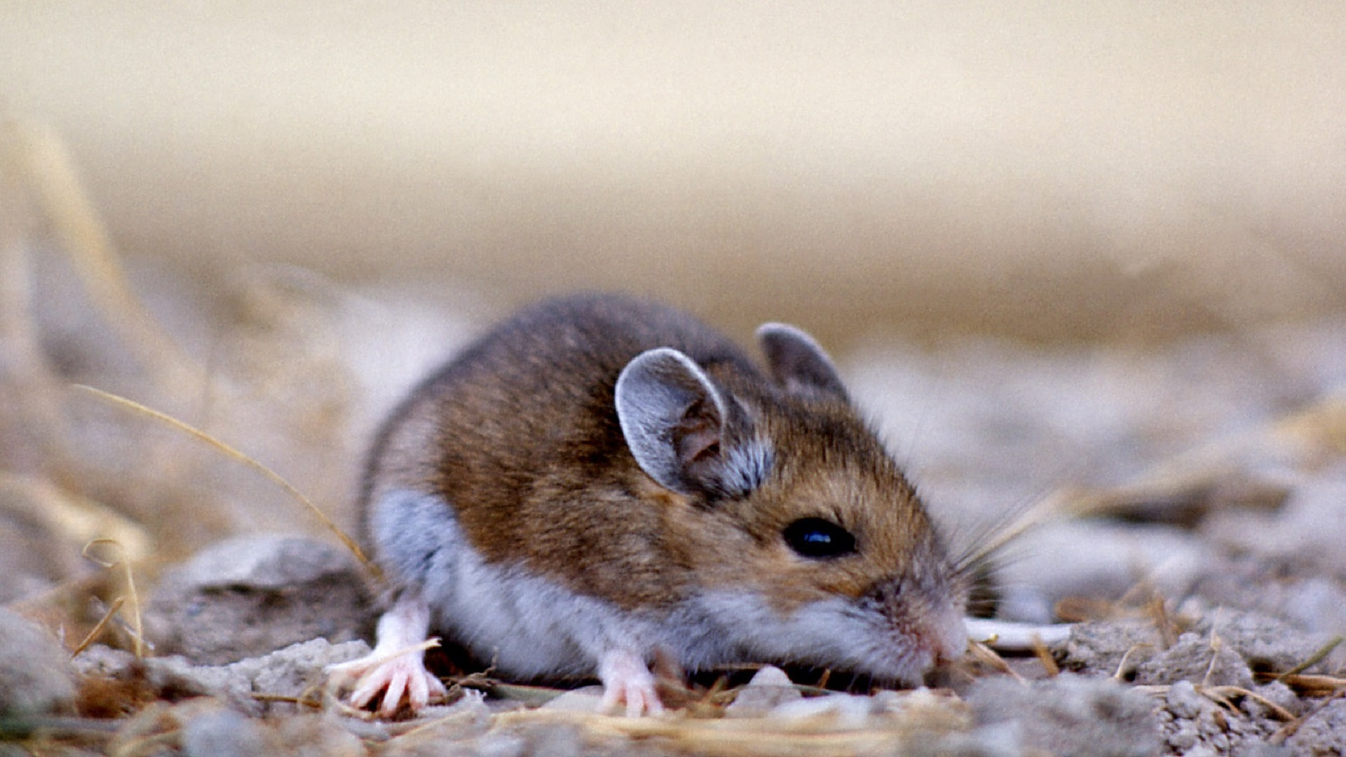 Be aware of the risks of contracting hantavirus says AHS ...