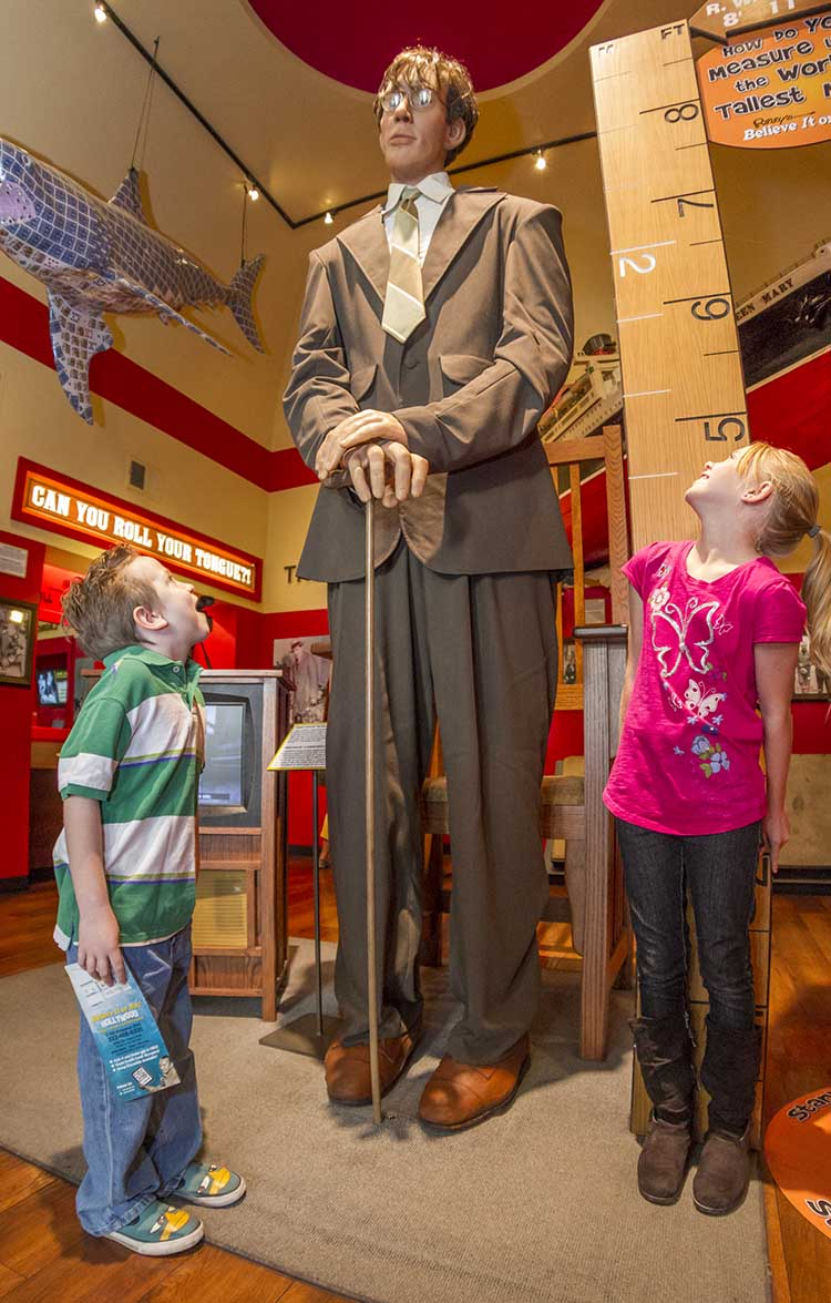 the tallest man in