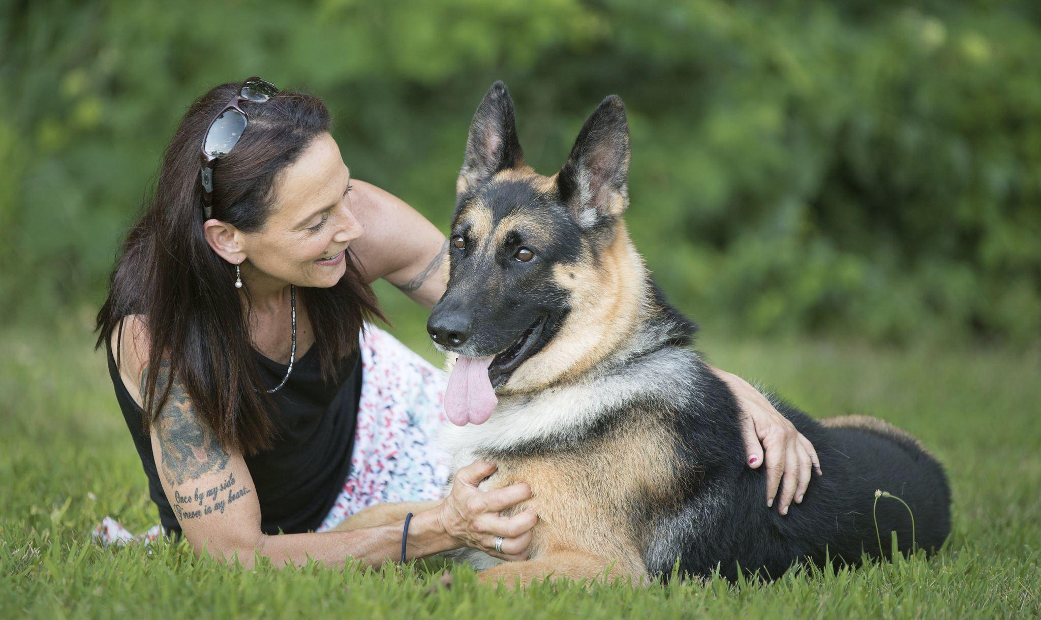 Dogged Badly Wrecked German Shepherd Shows At