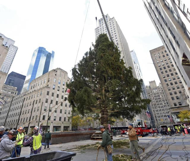 Workers Raise The  Rockefeller Center Christmas Tree A  Foot Tall