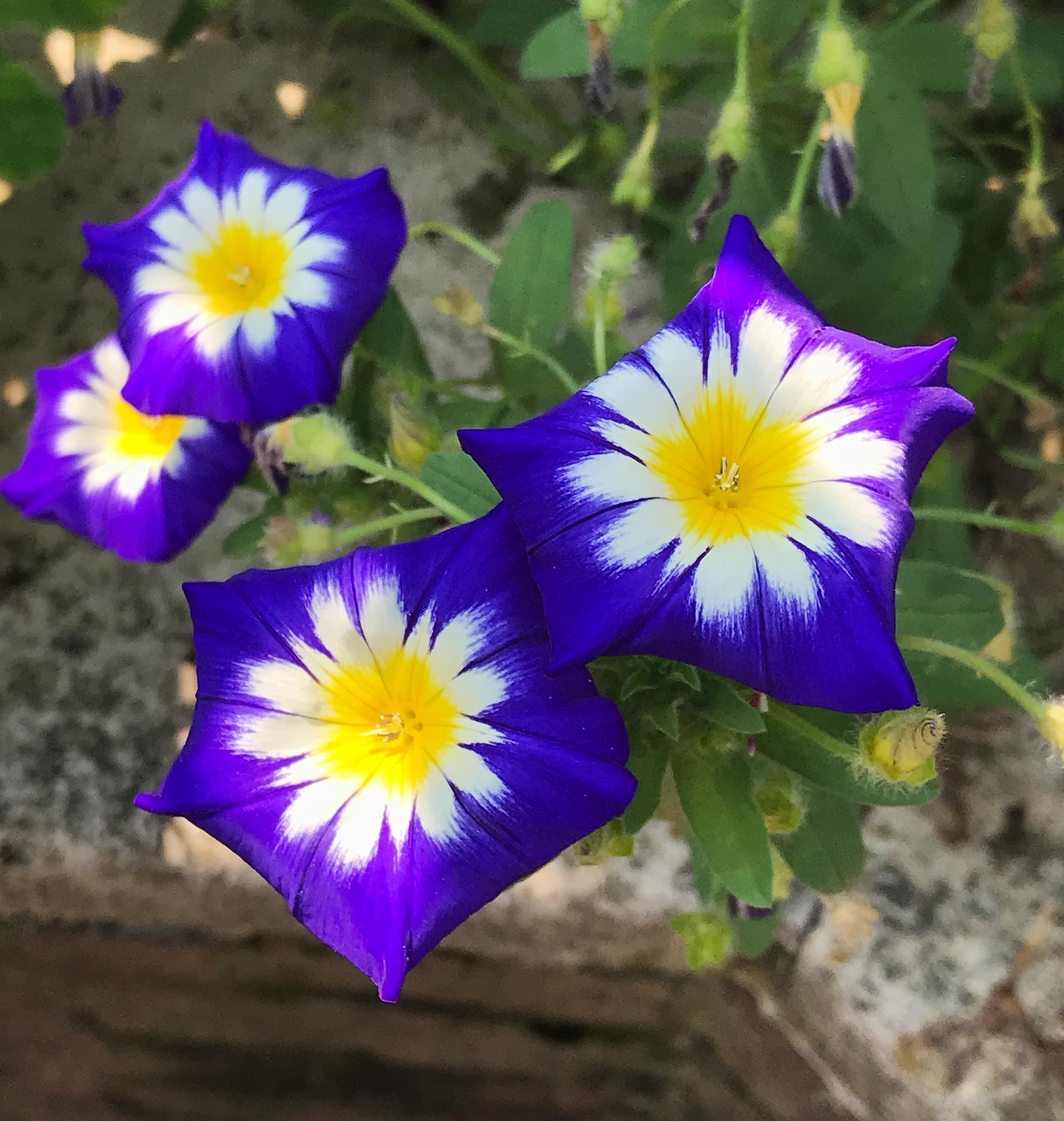 In The Garden Flowers Bring Beauty Birds Bees And Butterflies To The Garden The Spokesman Review