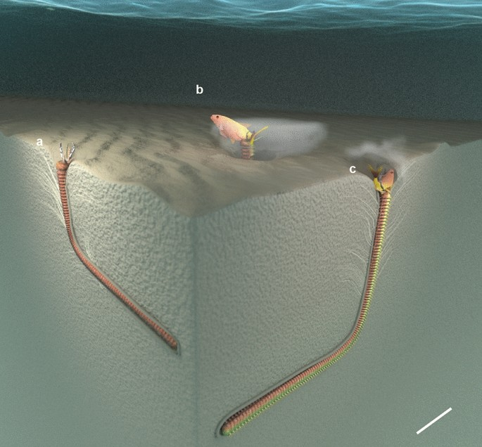 Diagram of prehistoric worm burrow in the seafloor with worm inside