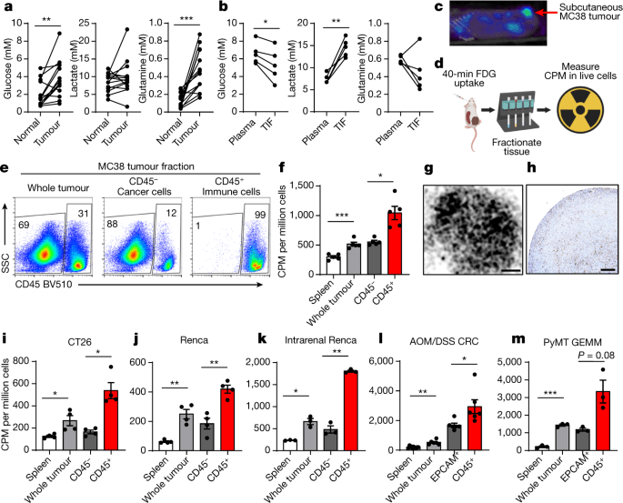 Cell-programmed nutrient partitioning in the tumour microenvironment |  Nature