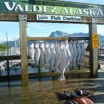 Fisketävling. Valdez