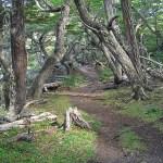 Vandringsled Tierra del Fuego