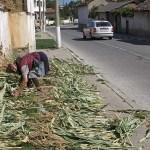 Torkning av gräs