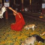 Jumping cat monastery. Inlesjön