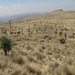 Simien Mountains National Park (U)