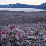 Jespersen Glaciären