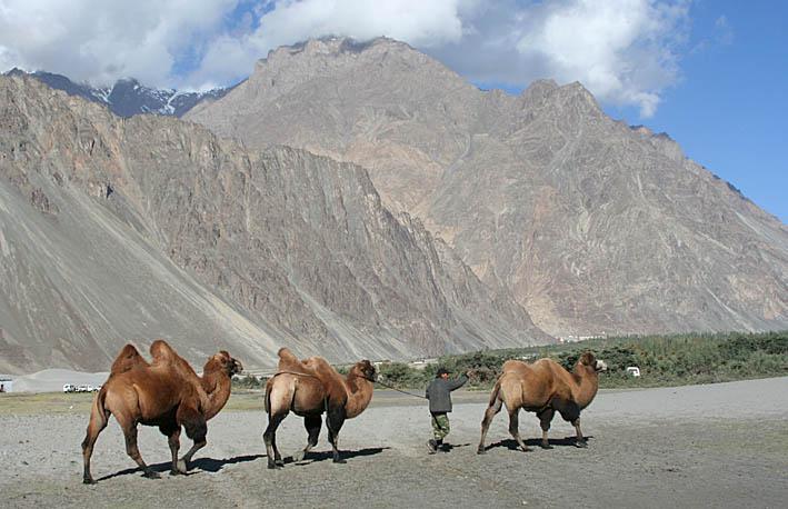 indien-ladakh-nubra-valley_04