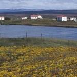 Gårdar vid sjön Myvatn