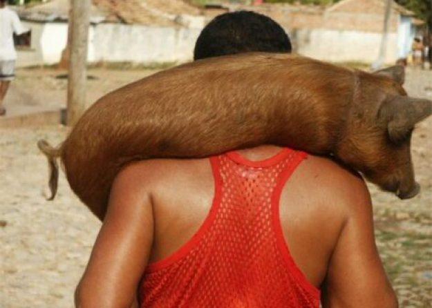Man med gris. Trinidad