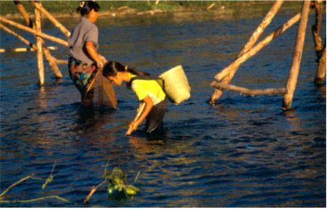 Sjögräsplockning. Vang Vieng