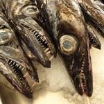 Espada, en djuphavsfisk. Fiskmarknaden. Funchal