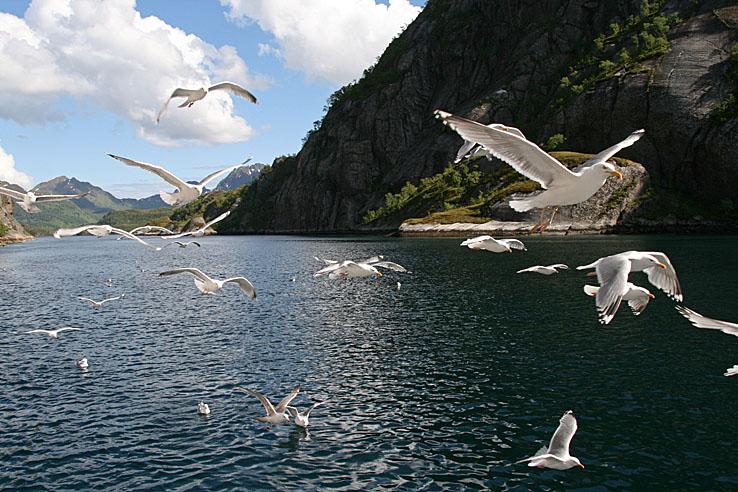 Trollfjorden. Kabelvåg