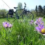 Cykling på Österlen. Simrishamn