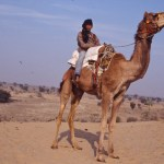 Ung kamelryttare. Hadyal