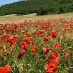 Spansk landsbygd