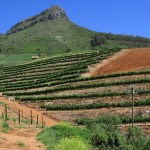 Vinberg. Stellenbosch