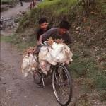 Hönsförsäljare. Byn Besi Sahar, 620 möh