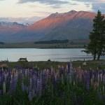 Solnedgång. Lake Tekapo