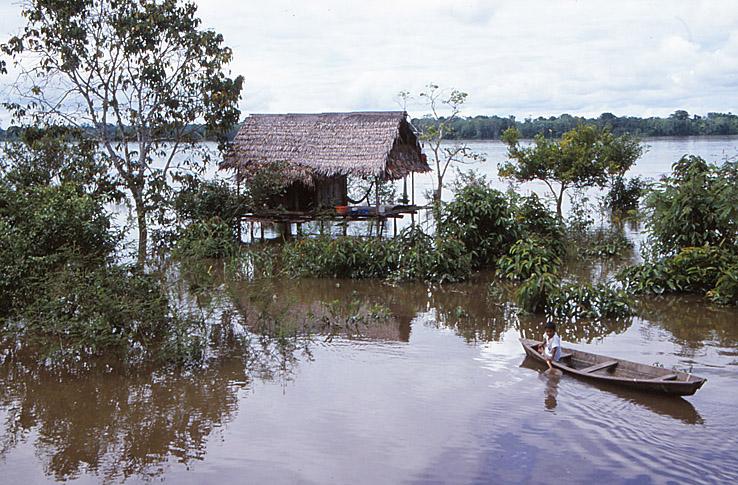 Indianhus. Amazonas