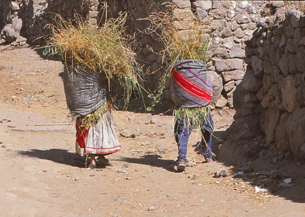 Bönder. Colca Canyon