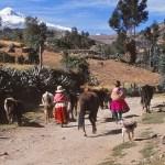 På väg till byn