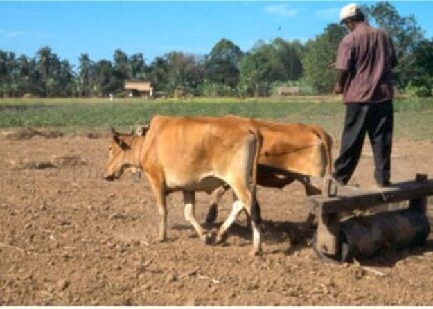 Jordbrukare. Kratie