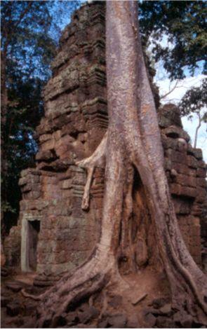 Templet Ta Prohm. Angkor Vat (U)
