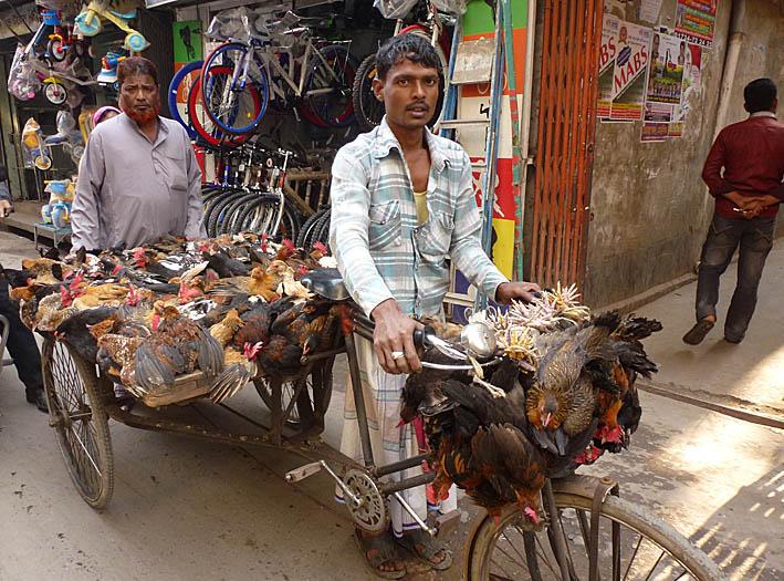 Chickenexpress? Dhaka