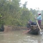 Uttrarna driver fisken till nätet