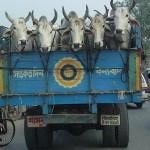 Möte på vägen till Khulna