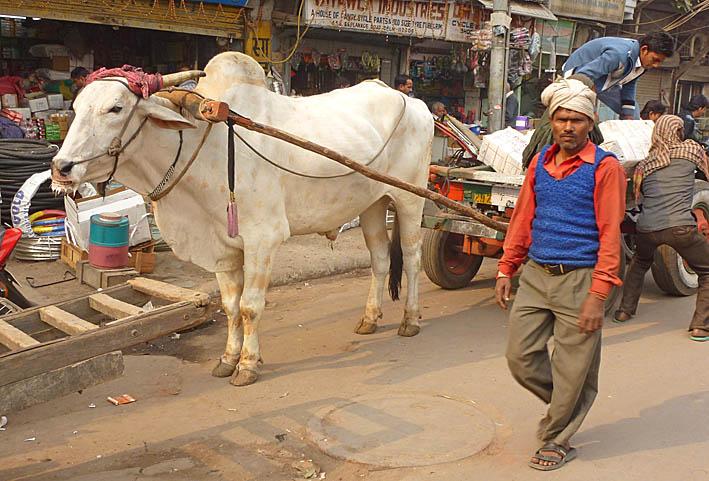 indien-old-delhi_008