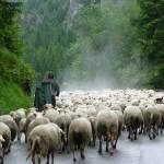 Vägen till Vratna Dolina