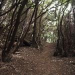 På vandring i Anaga-bergen