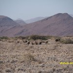 Namibiskt landskap. Solitaire