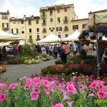 Piazza Amfiteatro. Lucca