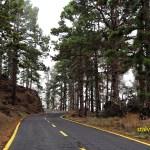 Vägen gick genom vacker tallskog. Las Manchas