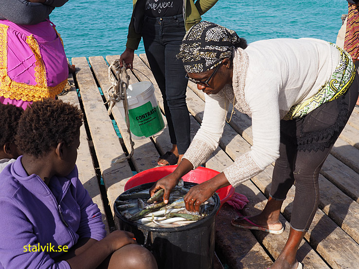 Rensning av fisk. Santa Maria