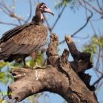 Gam. Abuko Nature Reserve