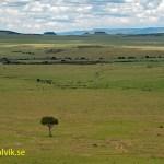 Vy över Masai Mara